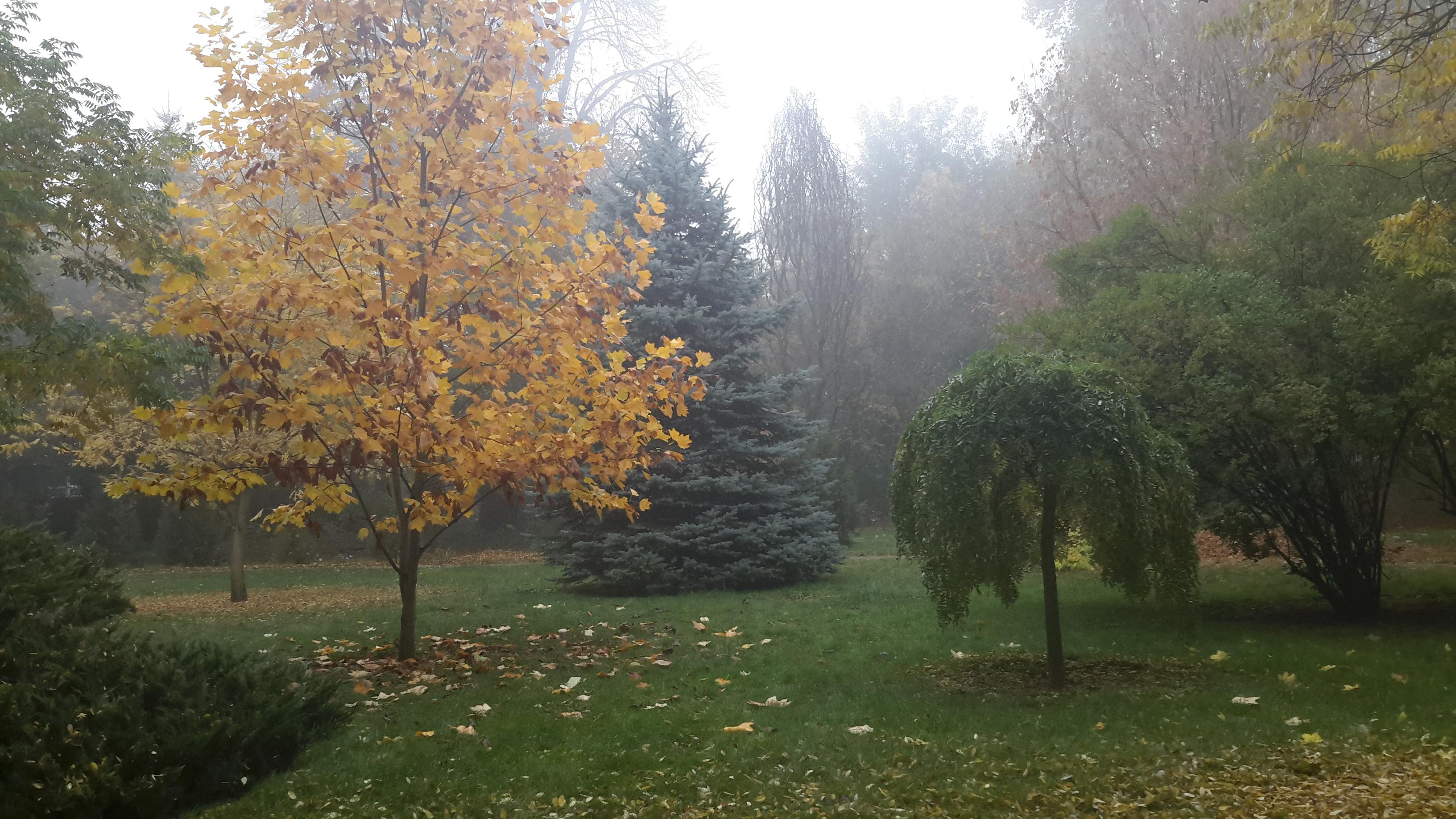November havi védikus prognózis (373.)