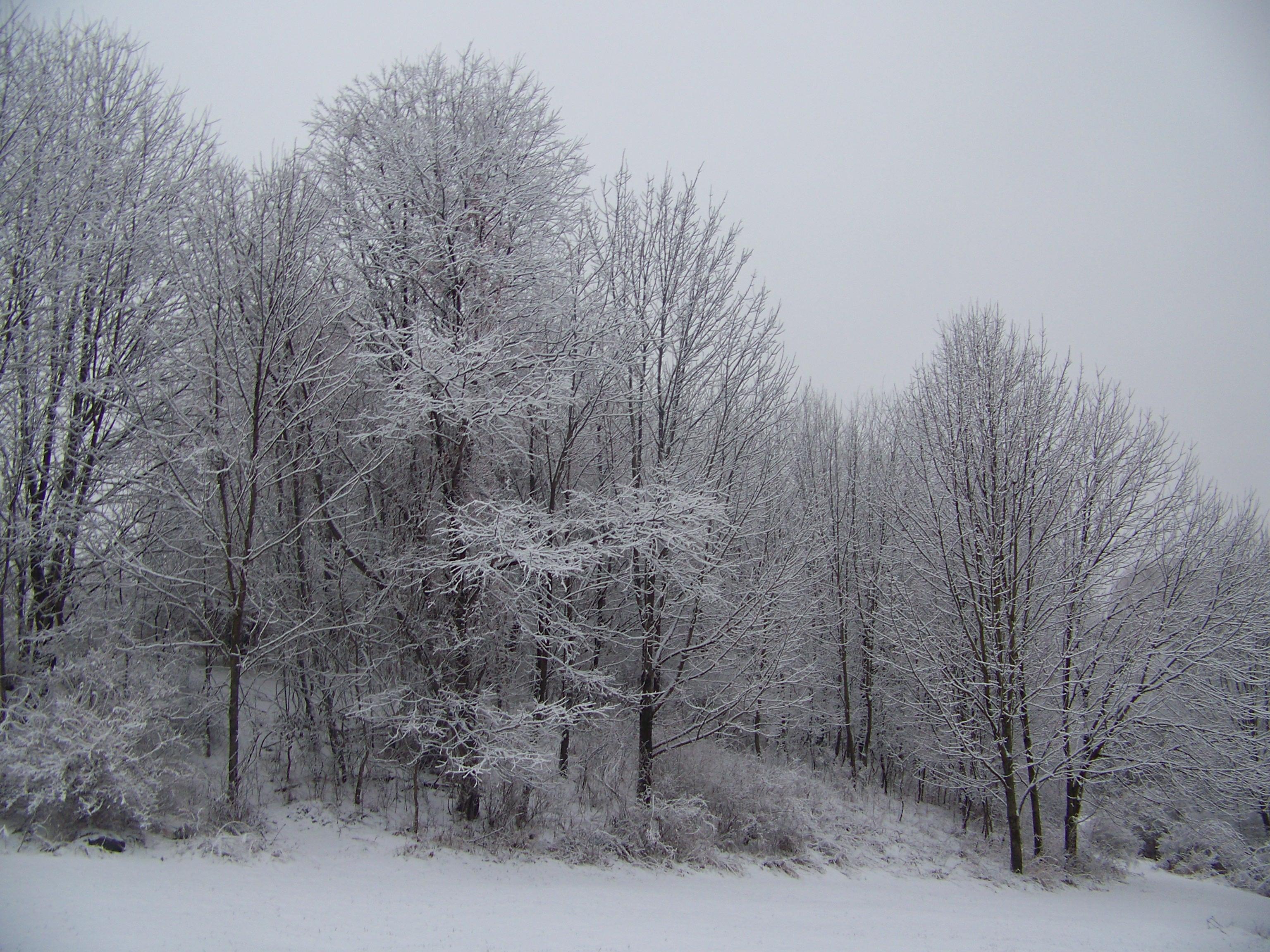 December havi védikus prognózis (376.)